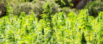 How we All Use Hemp Every Day